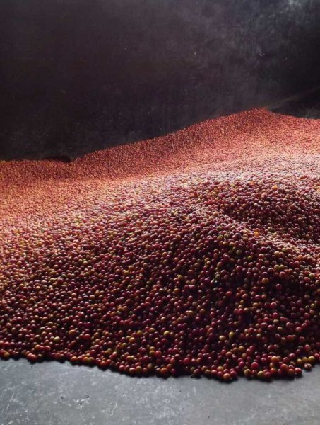 Kenyan Kiambara AA single origin coffee beans