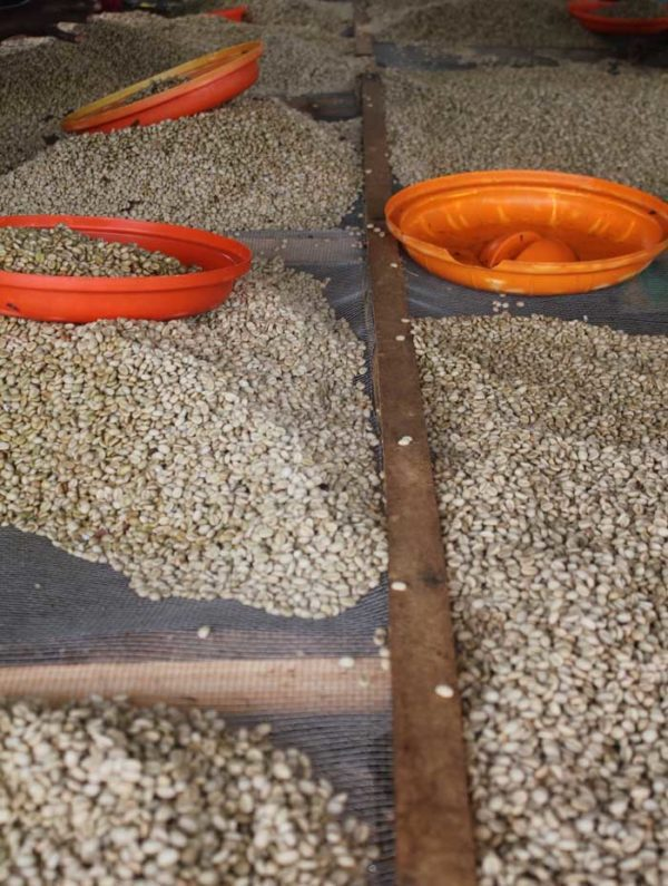 Rwandan Huye Mountain Micro Lot Single Origin Coffee Beans