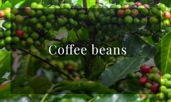 freshly roasted speciality coffee beans